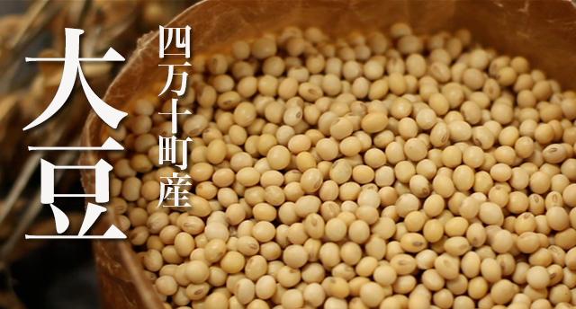 四万十町産 大豆